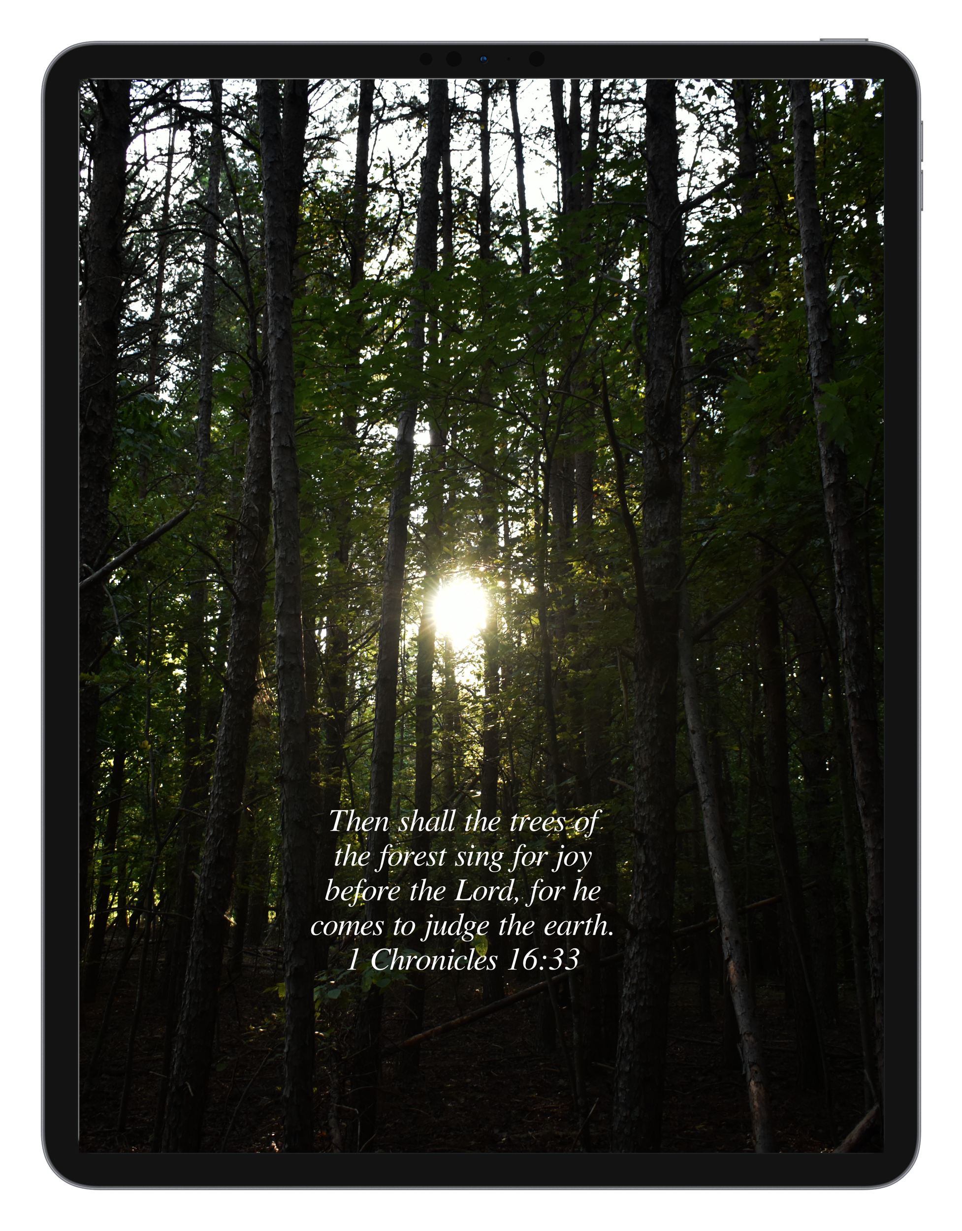 1 Chronicles 16:33 by Biblical Wallpapers